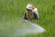 خطيير:مبيدات فلاحية في غاية الخطورة تملأ الأسواق المغربية و تسبب السرطان للمغاربة