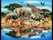 لأول مرة بأكادير: إنجاز حديقة حيوانات بمواصفات عالمية وباستثمار مالي قدره 5 ملايير