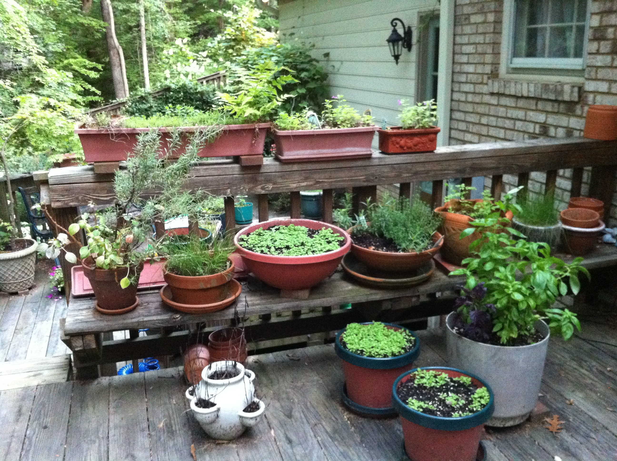 Herb Container Ideas 1000 43 Images About Growing Herbs In Containers On