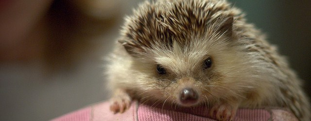 The Personal Hedgehog Concept 2.0: Discover What You're Meant to Do