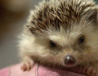 The Hedgehog Concept in Good to Great by Jim Collins can transform your life as well as your business. Finding your Personal Hedgehog is the […]