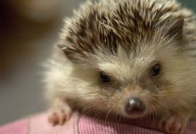 The Hedgehog Concept in Good to Great by Jim Collins can transform your life as well as your business. Finding your personal hedgehog is the...