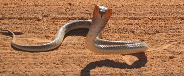 The Cobra Effect: Beware perverse incentives