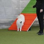 Fem fejl du begår, når du træner din hund