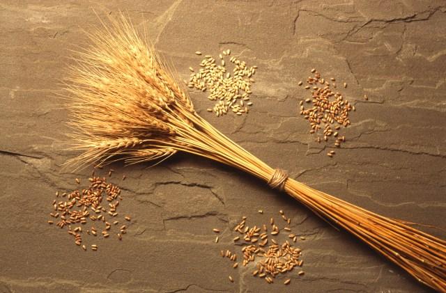 USDA-stalk-kernels2