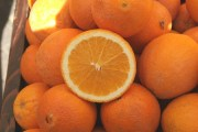Navel Orange in California