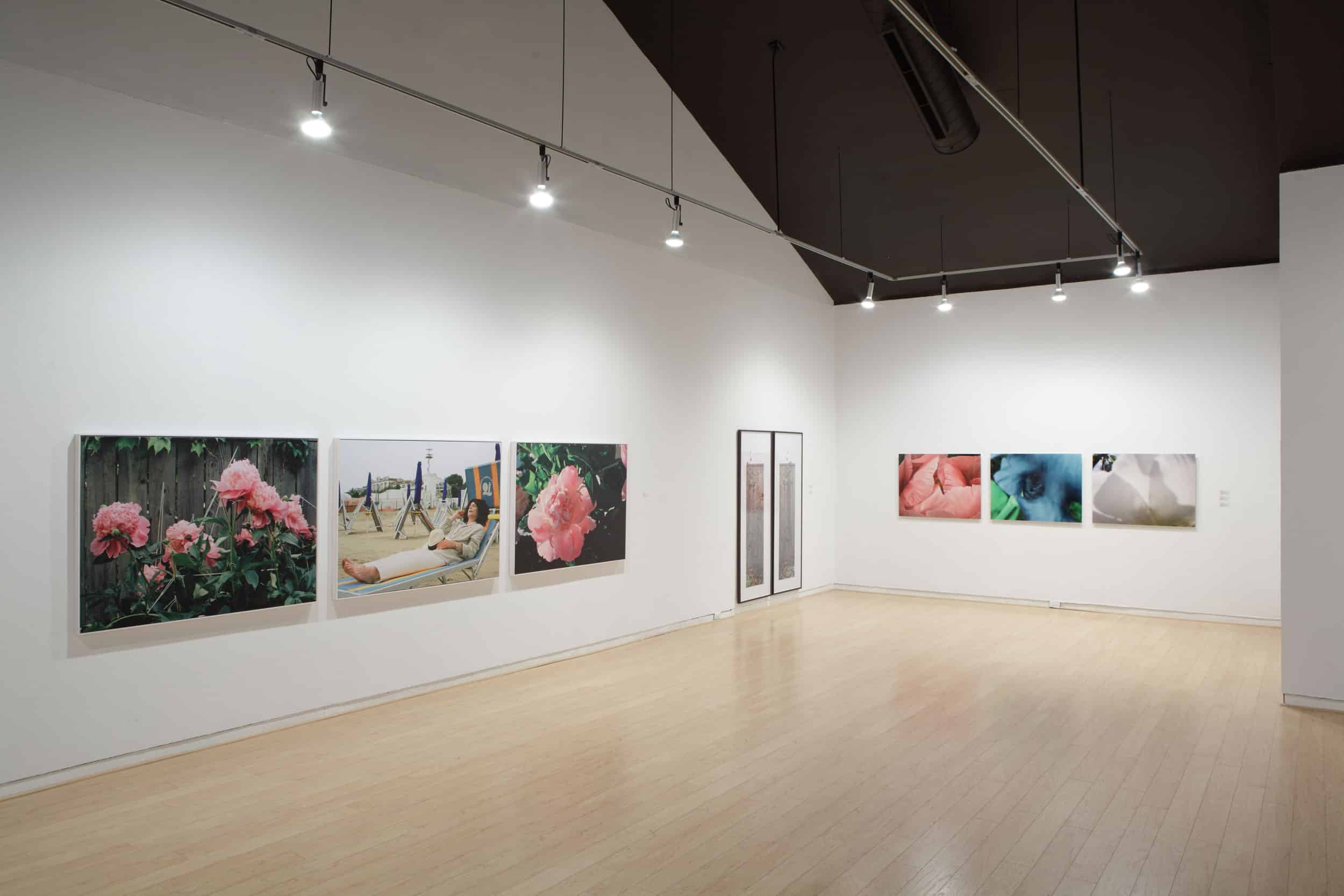Photography Exhibition Flowers And Photography Art Gallery Of Peterborough