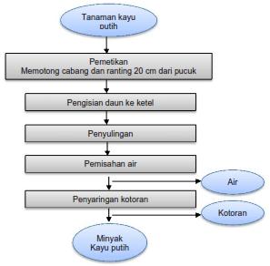 Proses Penyulingan Minyak Kayu Putih Manfaat Tanaman Kayu Putih Herbalisnusantaracom 301 Moved Permanently