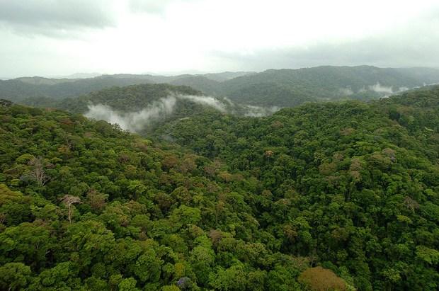 Panama Rainforest 1