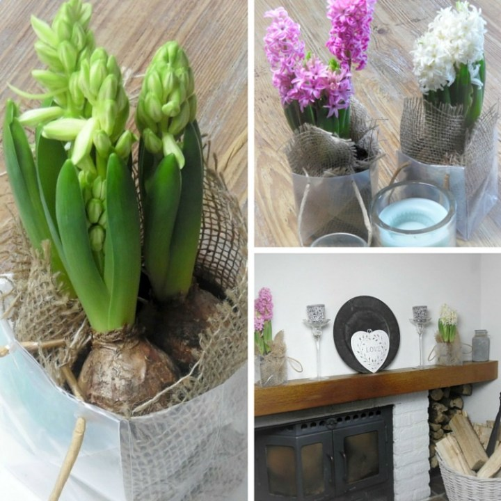 Photos showing how you can use spring bulbs to decorate the home