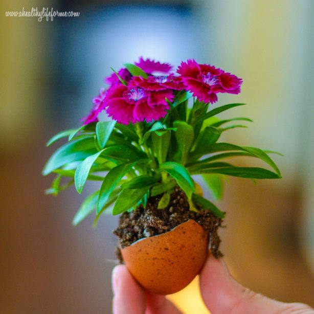 DIY Eggshell planter for Earth Day #EarthDayProjects