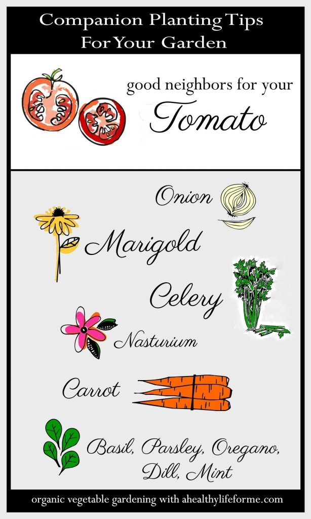 Companion Planting Tips for your Tomatoes