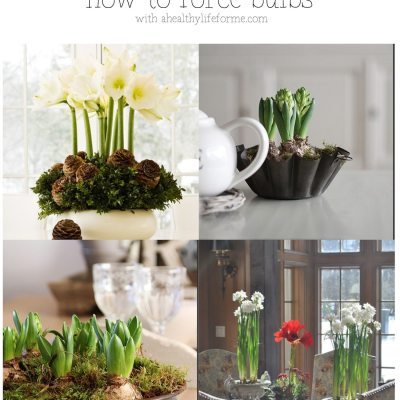 How to Force Bulbs
