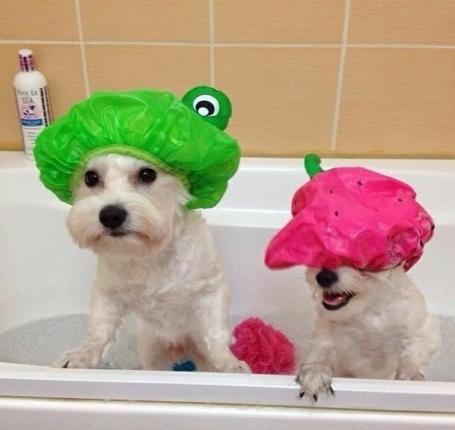 ShowerCaps