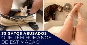 33 Gatos Que Pensam que és o Animal de Estimação Deles