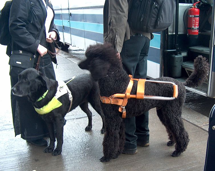 Qantas Dog Carrier Delta Praised For Softening Stance On Guide Dogs Airline