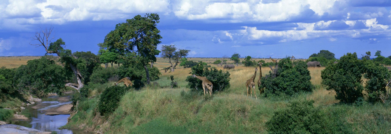 001-giraffes-kenya