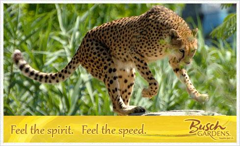 cheetaka 01 Busch Gardens – Was ist das Geheimnis der neuen Achterbahn?