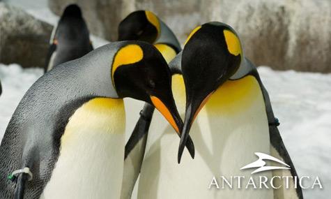 SeaWorld Antarctica SeaWorld Orlando bestätigt Erweiterung und neue Attraktionen bis 2013
