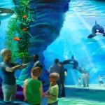 Sea World investiert 2011 in mehr neue Attraktionen als jemals zuvor!