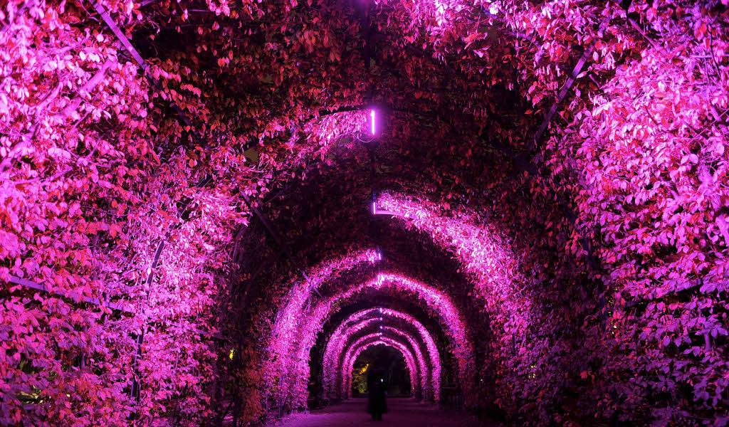 Pink Cherry Blossom Wallpaper Hd Ganz In Pink Stra 223 Burg Badische Zeitung