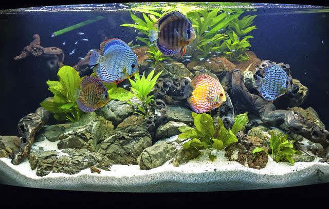 Aquarium Einrichten Ideen