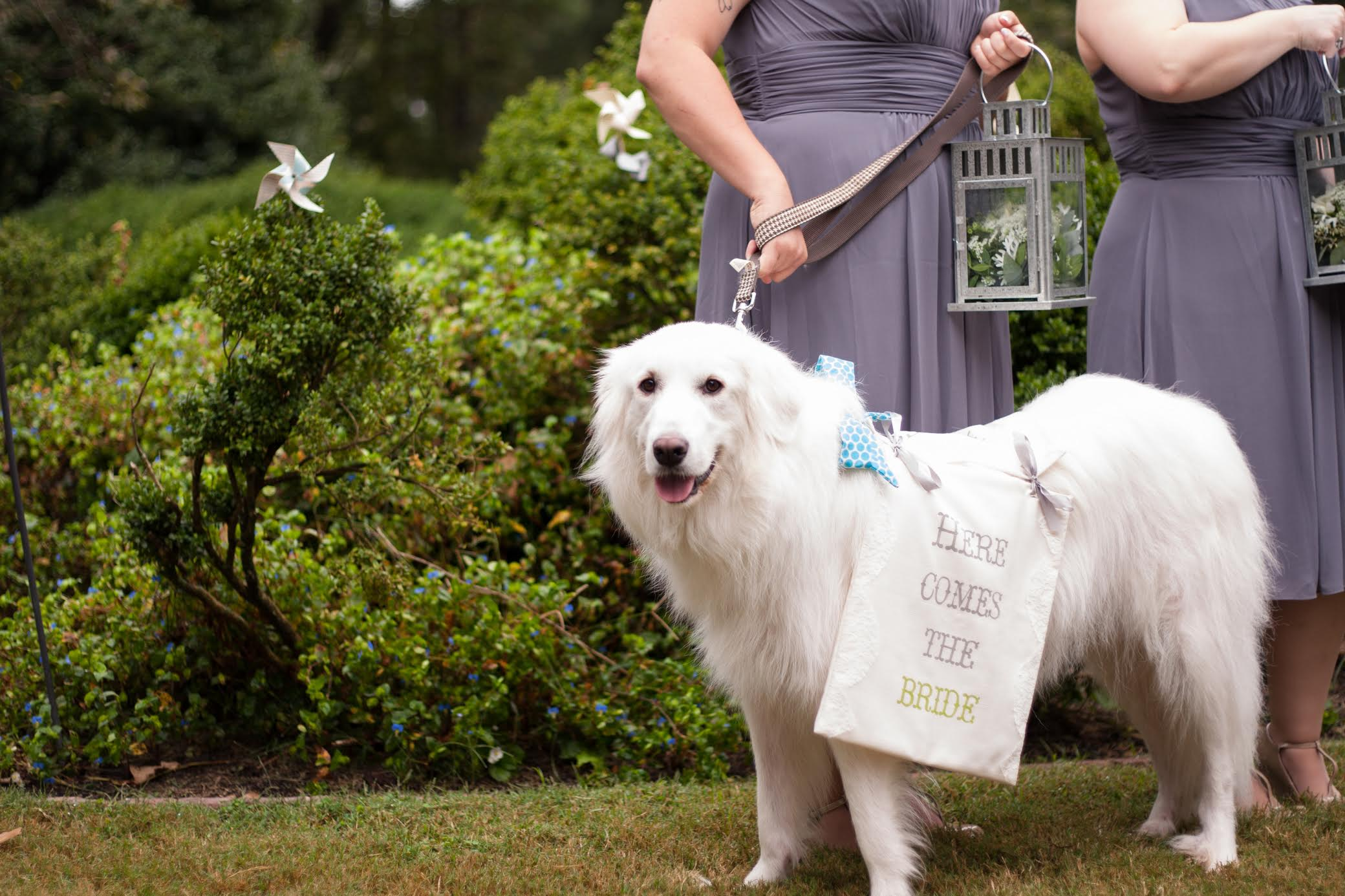pet in bridal party