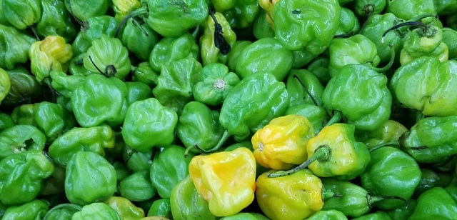 scotch-bonnet-peppers