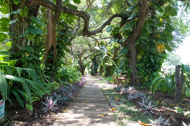 Hope Botanical Gardens, Kingston, Jamaica