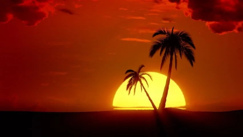 Time-lapse Tropical Sunrise with Palm Stock Footage Video (100