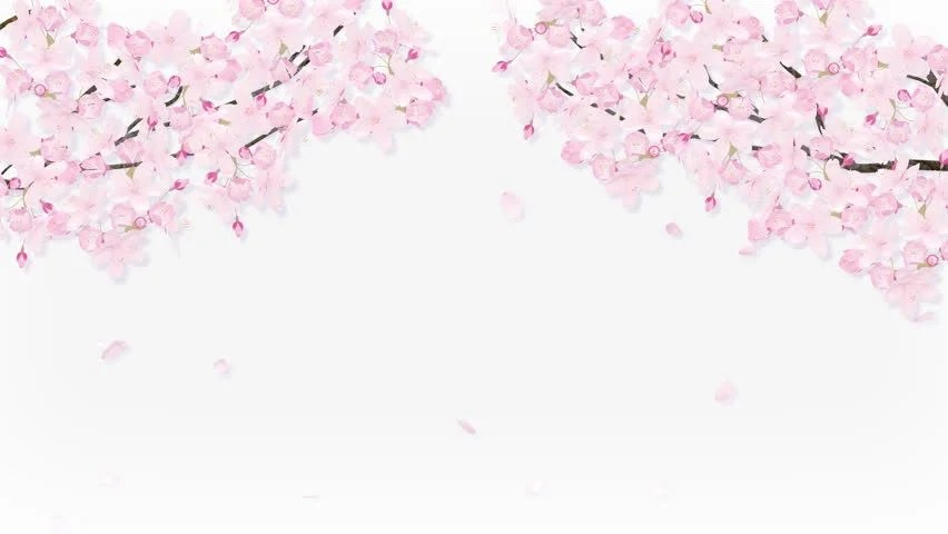 Free Animated Falling Leaves Wallpaper Falling Petals On The Cherry Blossom Arch Frame Stock