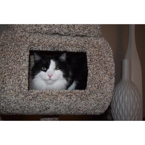 Medium Crop Of New Cat Condos