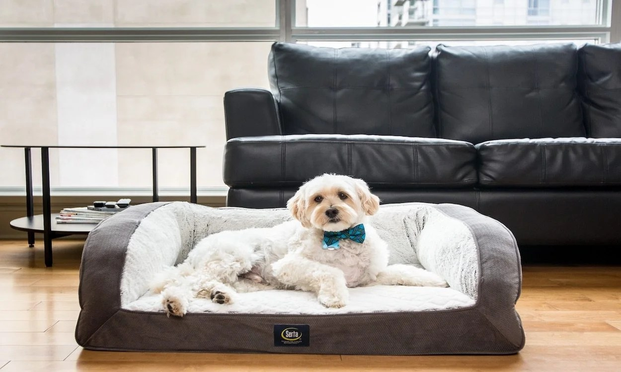Dog Beds Pet Best Dog Beds For Small Dogs Overstock