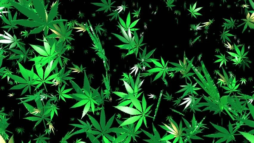 Animated Falling Leaves Wallpaper Flying Cannabis Leaves On Black Stock Footage Video 100