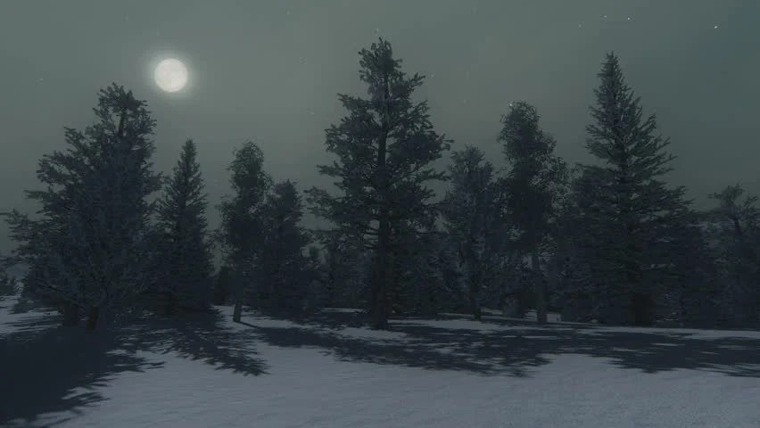 Download Snow Fall Animated Wallpaper Nighttime View Of The Snow Covered Spruce Forest Under