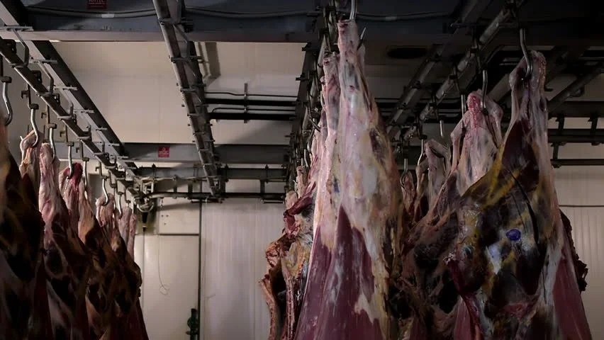 Stock Video Of Raw Meat Hanging In A Slaughterhouse