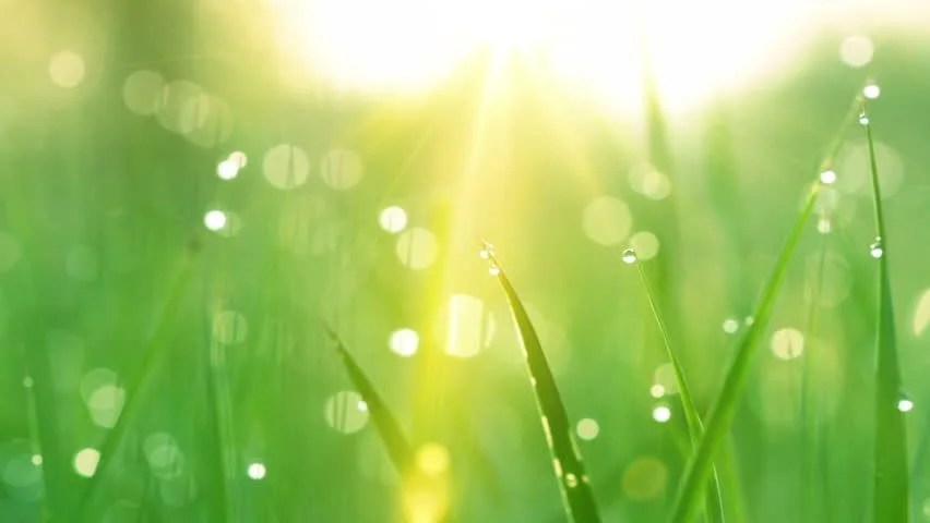 Rain Drop Wallpaper Hd Blurred Grass Background With Water Drops Hd Shot With
