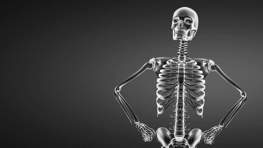 X Ray Wallpaper Iphone 7 Realistic Human Skeleton 360 View With Loop Stock Footage