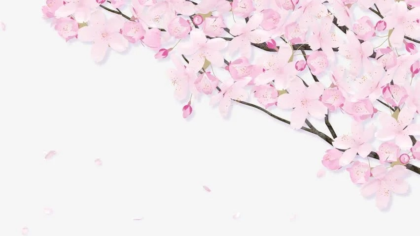 Stock video of animated scene of a cherry blossom 5980355 - cherry blossom animated
