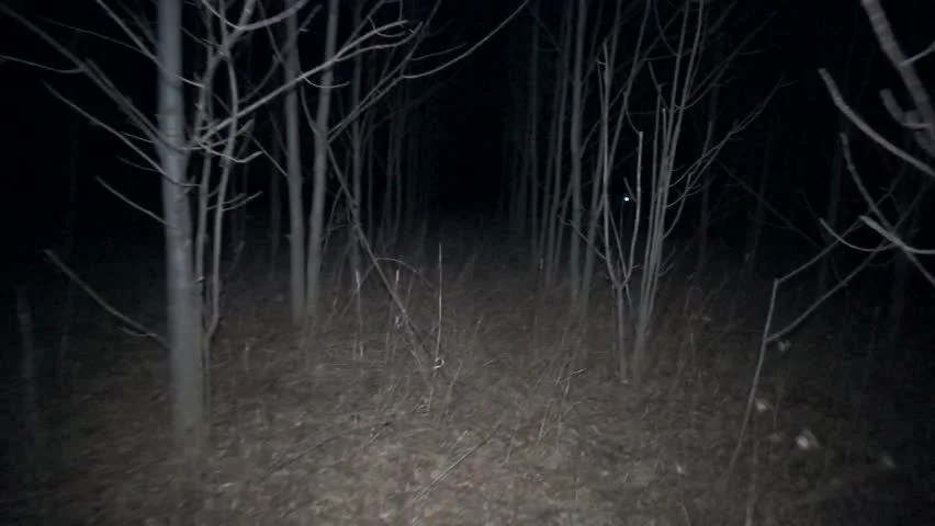 Spooky Trees Stock Video Free HD Stock Video Footage - Videezy