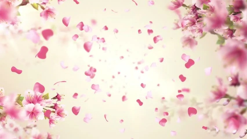 Cherry Free Video Clips - (39 Free Downloads) - cherry blossom animated