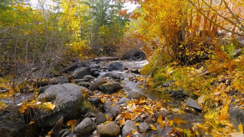 Falling Leaves In Water Live Wallpaper Stock Video Of Mountain River Among Large Boulders In