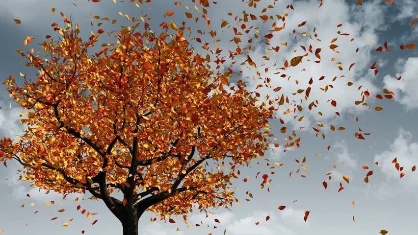 Falling Leaves Animated Wallpaper Stock Video Clip Of Concept Of Changing Of The Seasons