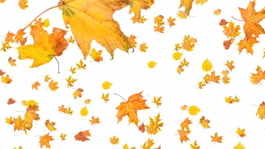 Falling Leaves Animated Wallpaper Orange Autumn Leaves Fall To The Ground Soft And Subtle