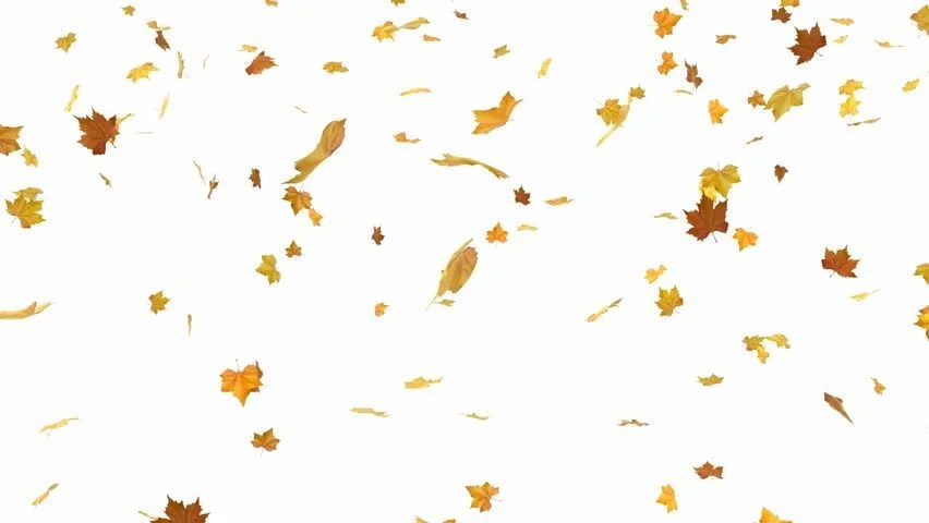 3d Falling Leaves Animated Wallpaper Free Download Falling Leaves Looped And Masked 3d Animation Stock