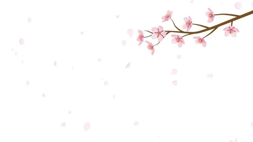 hd0030Blooming Cherry Blossom flower and Falling Petals Animation