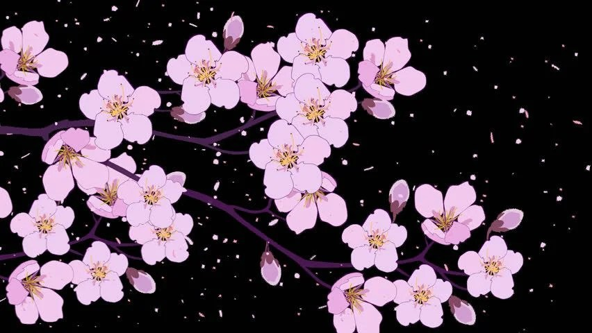Animated Cherry Blossom Branch and Stock Footage Video (100