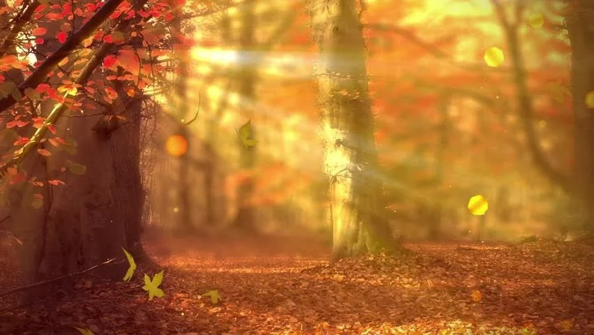 Falling Leaves Hd Live Wallpaper Stock Video Of Fall Background With Autumn Colors Light