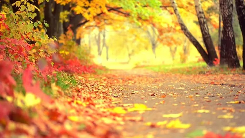 Free Cute Fall Wallpaper Stock Video Of Autumn Park Background Fall Beautiful