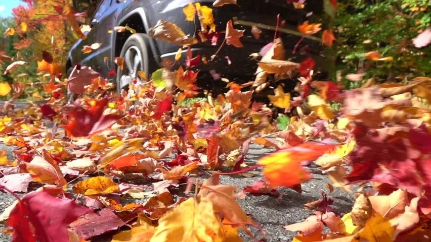 Fall Trees Wallpaper Forest And Leaves On The Ground Image Free Stock Photo